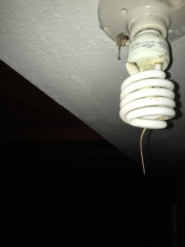 anole on light bulb
